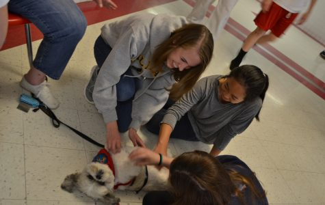 Furry friends provide stress relief