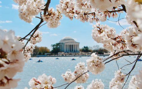 DC has finally blossomed