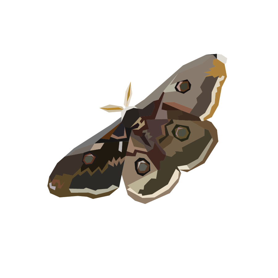 What type of moth are you quiz