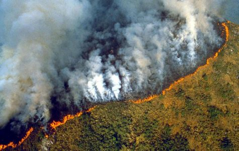 Forest fires take their toll on the Amazon