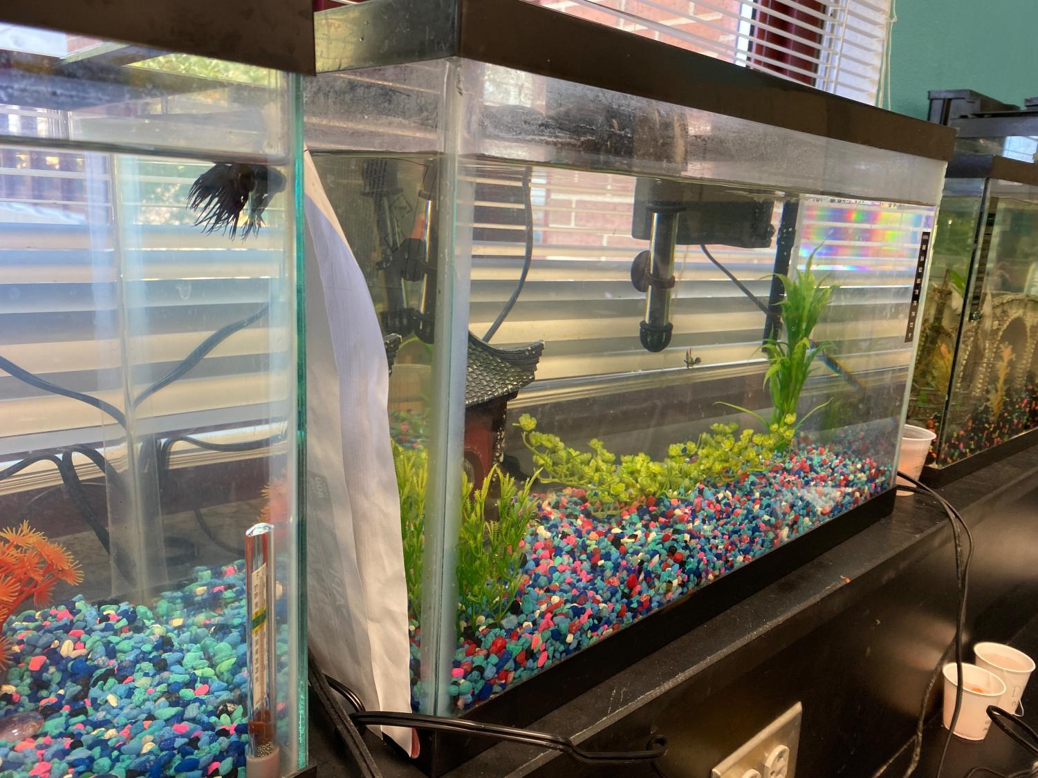 Pictured are student tanks in Andrew Diller and Kate Hoefer's classroom. Students enrolled in oceanography are able to observe their very own living ecosystem because of this project.