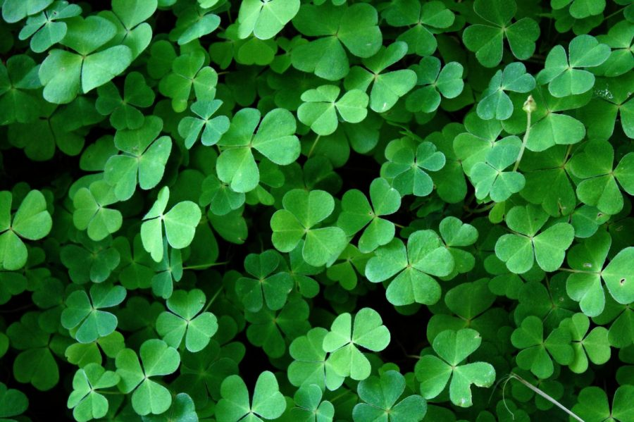 A brief history of green and St. Patrick's Day